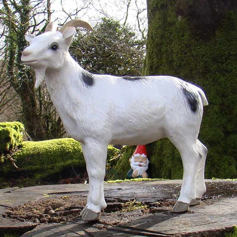 Billy the Kid Goat