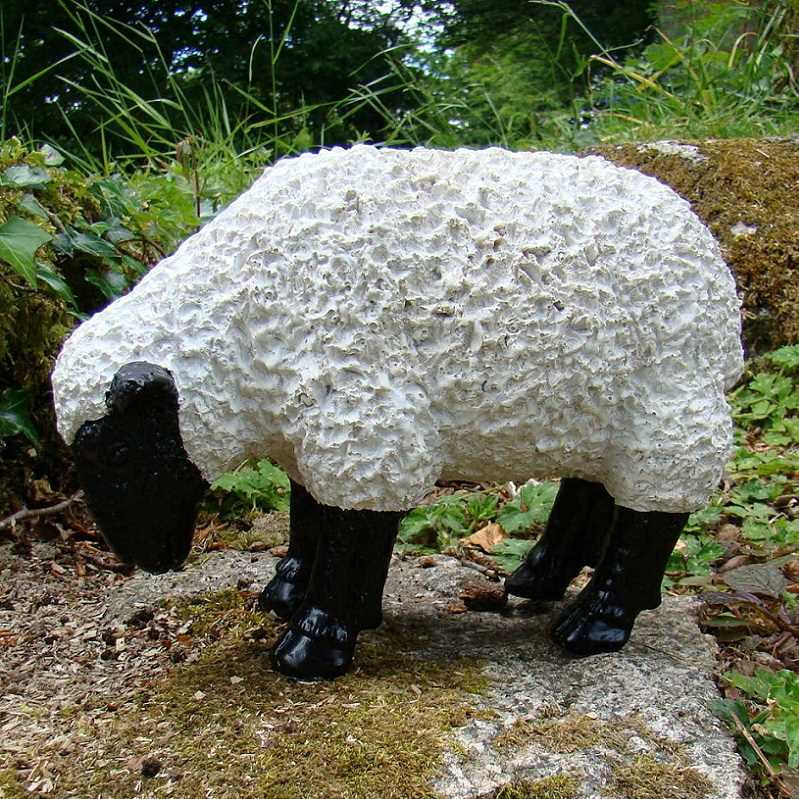 Blk/White Sheep grazing