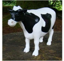 Black and White Cow front