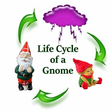 The Life Cycle of a Gnome
